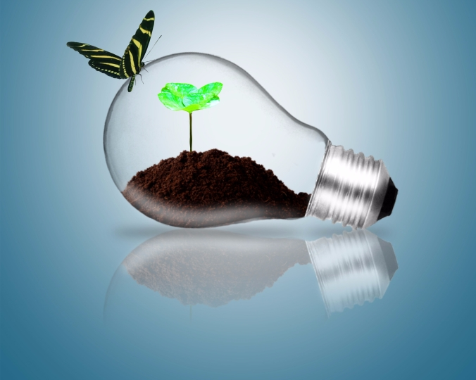 Lightbulb with butterfly and plant sprout